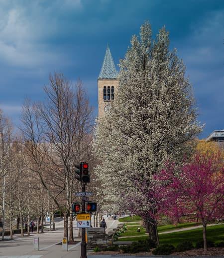 Campus building under a dark sky; spring trees