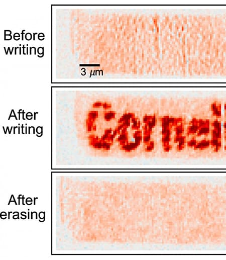 """Three boxes; one says """"Cornell"""" in red writing"""