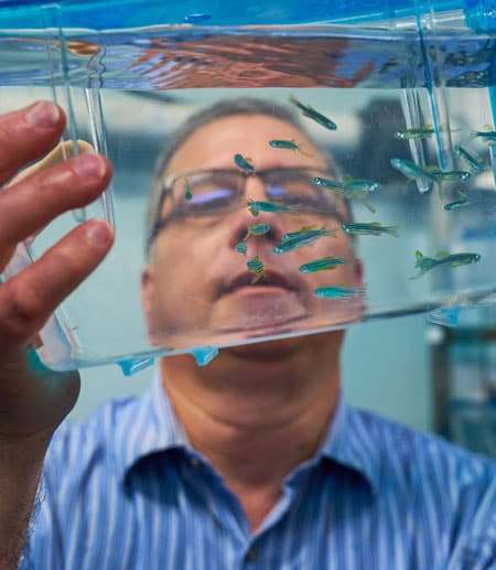 Joseph Fetcho looking at zebra fish
