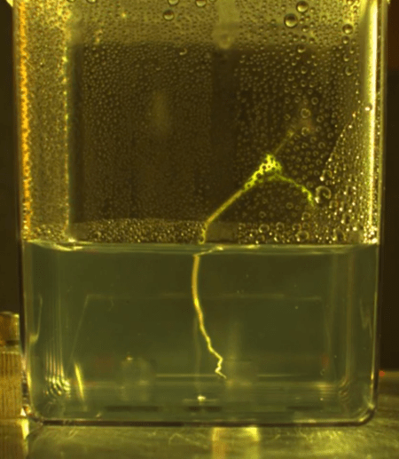 A single plant root floats in a container of water