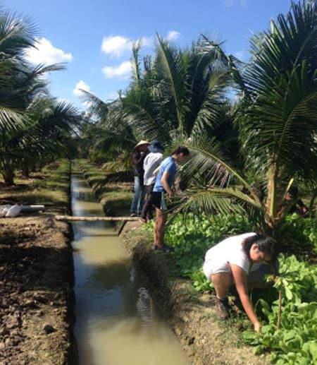 Students harvest vegetables on a farm in Bến Tre, the Mekong Delta, Vietnam