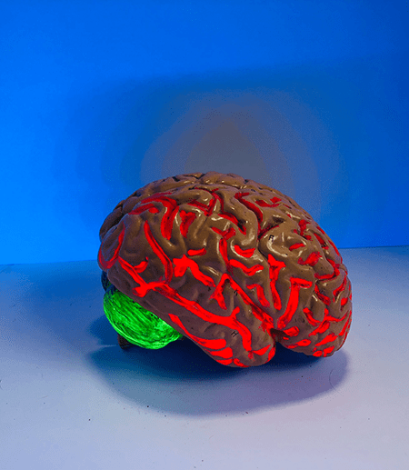 A human brain replica in front of a blue background.