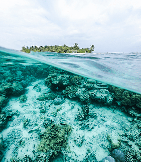 Under water view of white and green coral reel with an island in the distance.