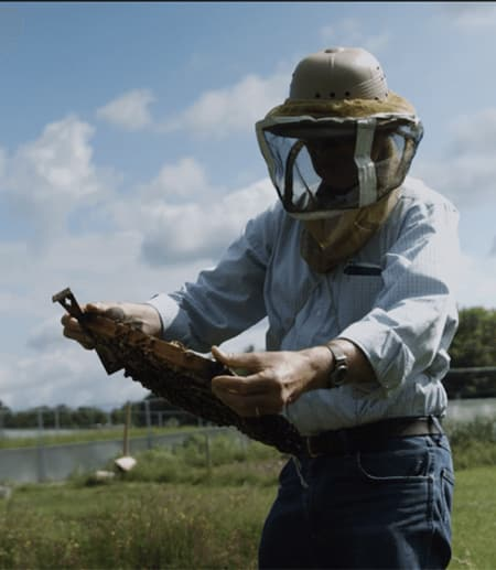 Person wearing bee-keeper protective suit