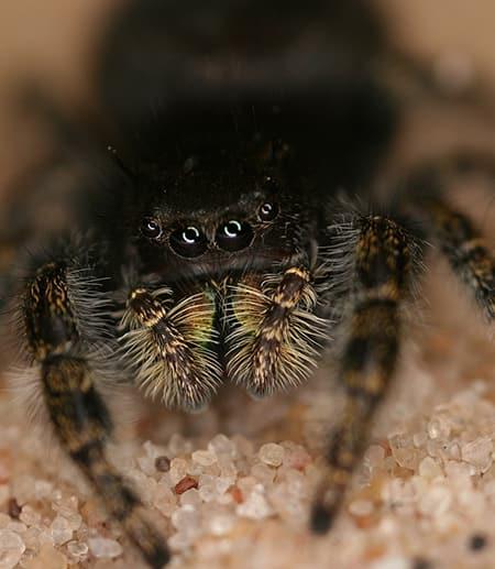 A furry spider