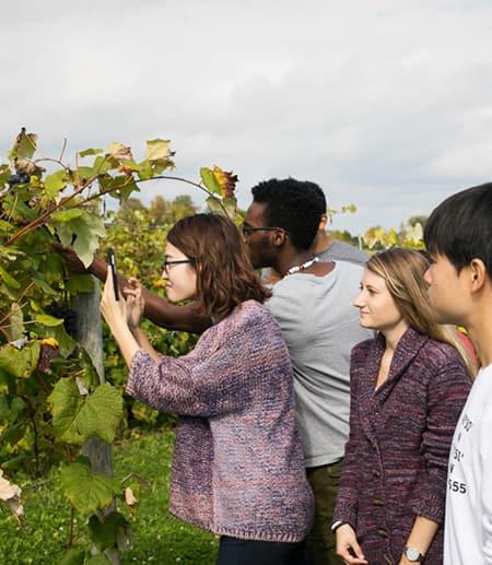 studnets examining grape leaves