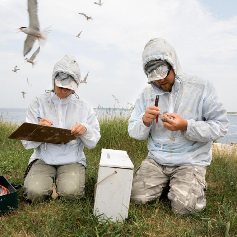 Undergraduates conducting research at Shoals Marine Lab