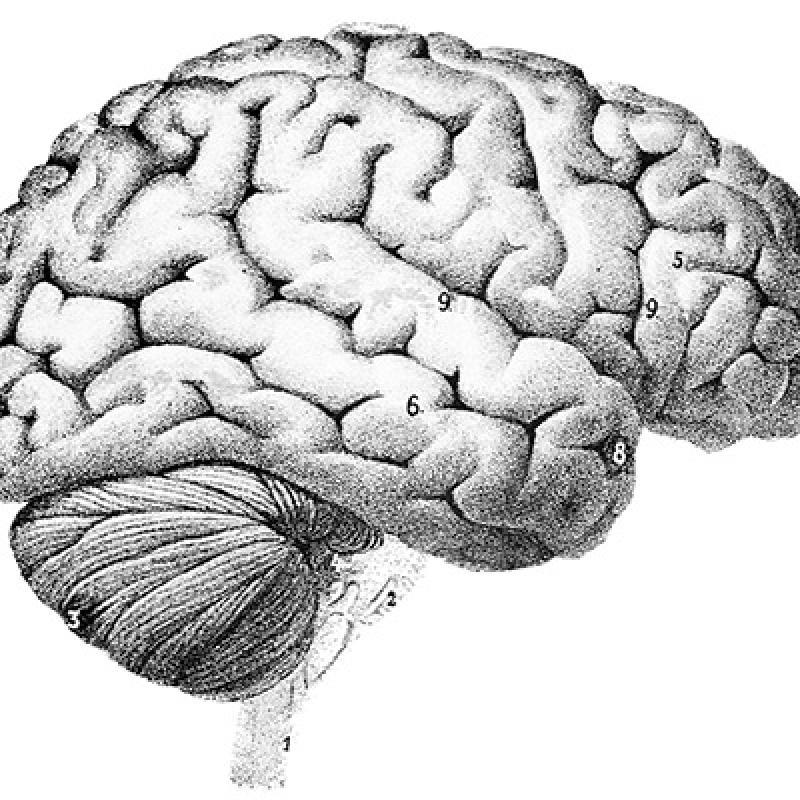 Cognitive Science Program