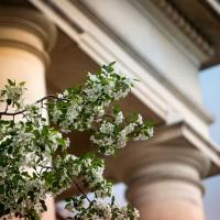 Tree in bloom outside building with marble columns