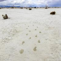 Footprints in dry ground