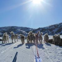 Huskies pulling sled