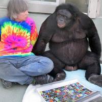 "Bonobos Kanzi and Panbanisha with Sue Savage-Rumbaugh with the outdoor symbols ""keyboard."""