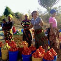 Roadside vendors sell tomatoes in Mikumi, Tanzania