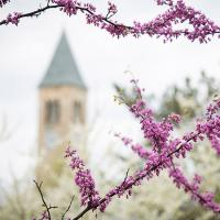 McGraw Tower in spring