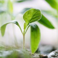 Tiny green plant