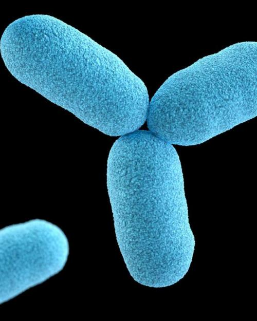 Blue oblong shapes (bacteria magnified)
