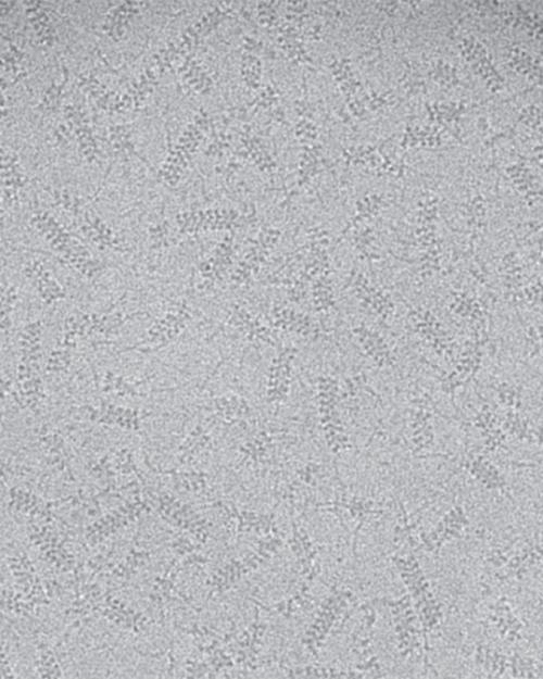 Image of hundreds of microscopic proteins shaped like cylinders