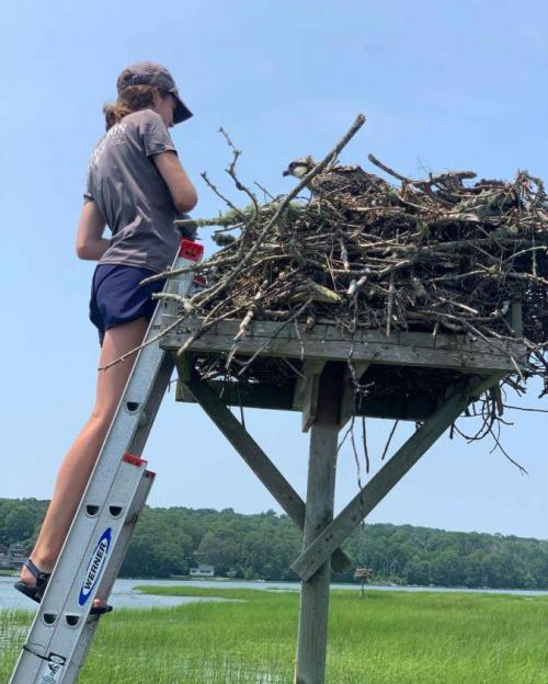 student on ladder looking into bird's nest