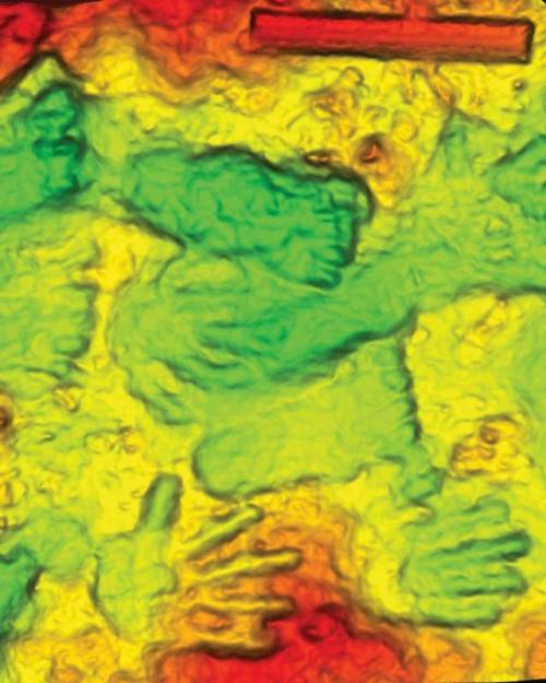 Colored three-dimensional scan of the hands and footprints
