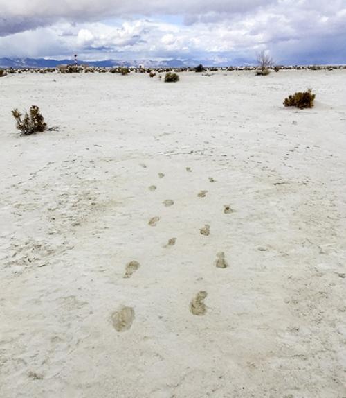 Footprints in dry ground
