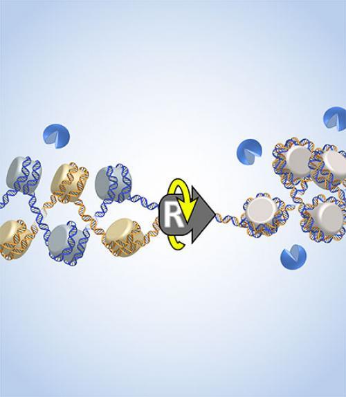 Scientific rendering of replication process