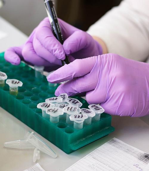 hands putting liquid in test tubes