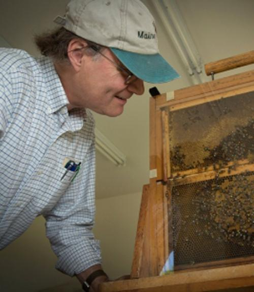 Tom Seeley and bees