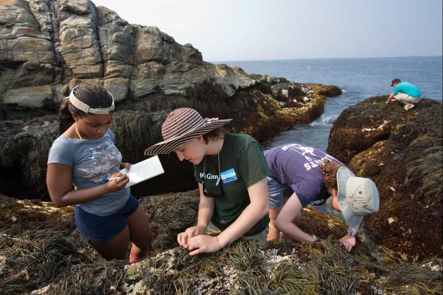 Research at Shoals Marine Laboratory. SML is a seasonal field station located on Appledore Island, ME.
