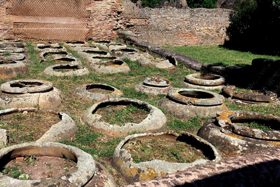 Large, round pots in neat rows, partially buried in grassy earth.