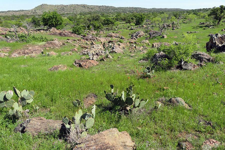Rancho Cascabel landscape, with cactus plants, boulders, oak trees and a hill in the background